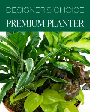 Designer's Choice Premium Planter Plant in Macon, GA | PETALS, FLOWERS & MORE