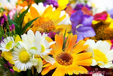 Designer's Choice Skillfully Designed by Our Expert Florists