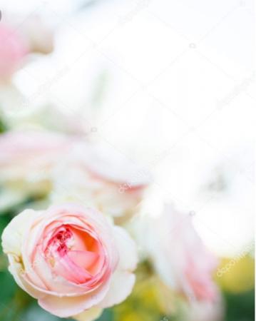 Designer's Choice Seasonal Flower Arrangement