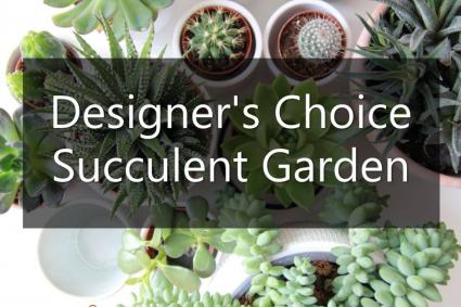 Designer's Choice Succulent Garden