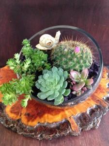 Succulent Garden Terrarium