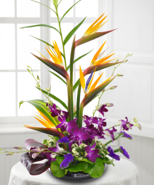 Designer's Choice Tropical in Prescott, AZ | PRESCOTT FLOWER SHOP
