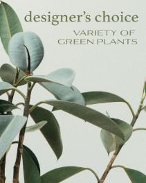Designer's Choice - Variety of Green Plants Flower Arrangement