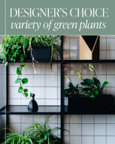 Designer's Choice - Variety of Green Plants in a B Plant