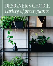 Designer's Choice - Variety of Green Plants Plant