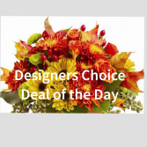 Desinger's Choice Deal of the Day Fall