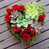 Desire Roses & Plants
