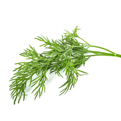 Dill Infused Olive Oil