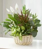 Dish Garden -medium