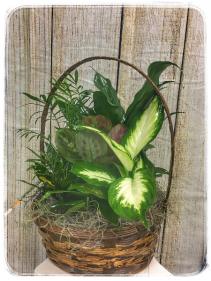 """Dish Garden - 10"""" Basket Plant"""