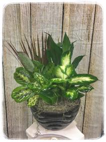"Dish Garden - 10"" Ceramic Plant"