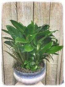 "Dish Garden – 12"" Ceramic Plant"