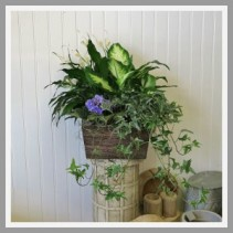 Hand Crafted Dish Garden Containers and Plants Vary