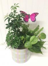 Dish Garden w/ Butterfly