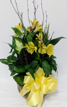 Dish Garden  in Douglasville, GA | The Flower Cottage & Gifts, LLC