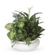 Dish Garden Ceramic Container