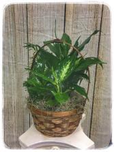 Dish Garden – 8″ Basket Plant