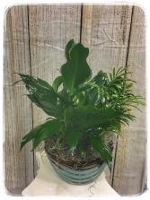 Dish Garden – 8″ Ceramic Plant