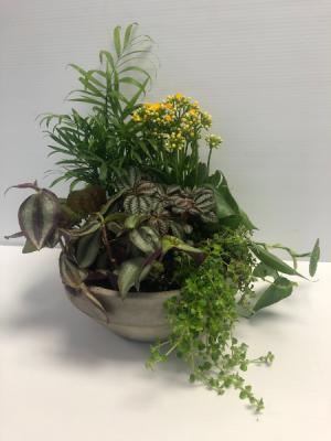 Dish Garden All-Around Floral Arrangement in Winnipeg, MB   KINGS FLORIST LTD