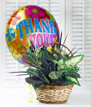 Dish Garden Plant & Mylar Balloon Admin. Professionals Day in Universal City, TX | BLOOMINGTONS FLOWER SHOP