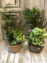 Dish Garden Assorted Easy Care Plants