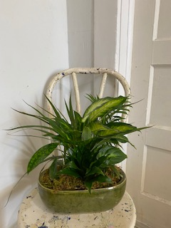 Dish Garden  Assorted plants