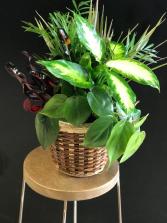 Dish Garden Assortment of green plants