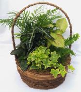 Dish Garden Basket