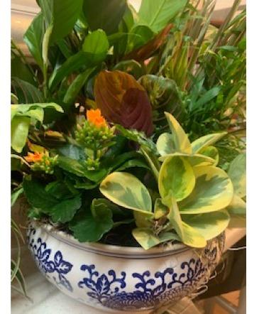 Dish Garden (Basket or Ceramic Bowl) Flowering Houseplants