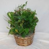 Dish Garden Basket Planter  Dish Garden Arrangement