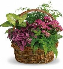 Bursting in Color Dish Garden & Silk Flowers