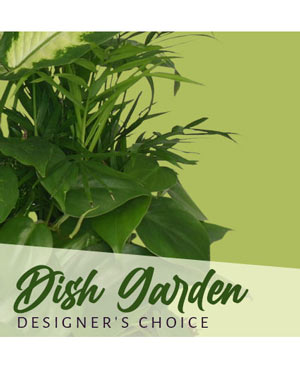 Dish Garden Designer's Choice in Oakland, ME | VISIONS FLOWERS & BRIDAL DESIGNS