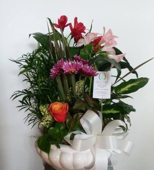 Dish Garden Dessed Plants in Norway, ME | Green Gardens Florist & Gift Shop