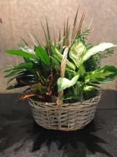 Dish Garden Dish Garden In A Basket
