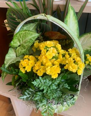 Dish Garden Flowering Houseplants in Bristol, VT | Scentsations Flowers & Gifts