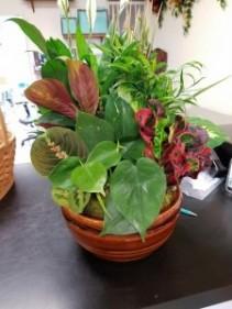 Dish Garden Green Plant Mixture