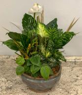 Dish Garden Green Plant