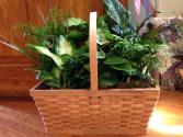 Dish Garden House Plant