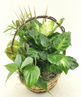 Dish Garden in a Basket Green Plant