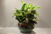 Dish Garden in a Ceramic Pot
