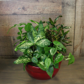 DISH GARDEN IN CERAMIC CONTAINER (Actual plants and container color may vary)