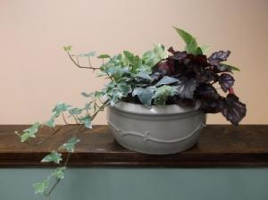 DISH GARDEN IN CERAMIC POT in Springfield, VT | WOODBURY FLORIST
