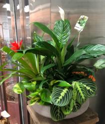 Dish Garden Indoor Plants