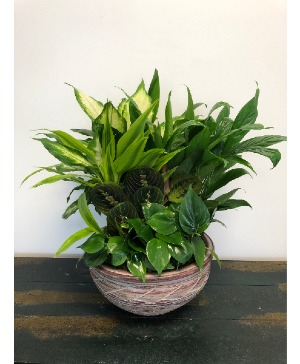 Dish Garden - Medium or Large  in Bluffton, SC | BERKELEY FLOWERS & GIFTS