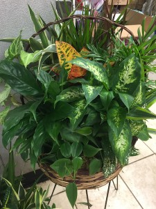 Dish Garden Live Plants