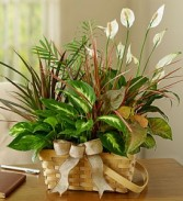 dish garden mixed plants in basket