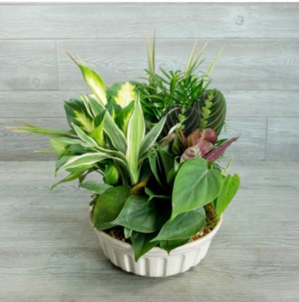 Dish garden of assorted green plants