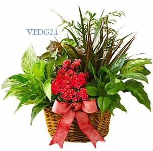 Dish Garden Of Love Plant