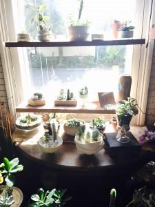 Succulent Cactus Garden plant