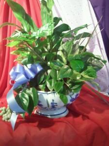 Dish Garden Plant Arrangement Ceramic pot design changes upon availibilty in Bristol, CT | DONNA'S FLORIST & GIFTS